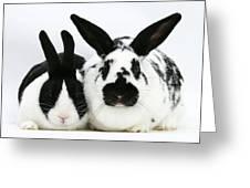 Dutch Rabbits Greeting Card