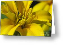 Dwarf French Marigold In Disco Yellow Greeting Card