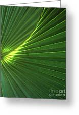 Dwarf Palmetto Leaves Greeting Card