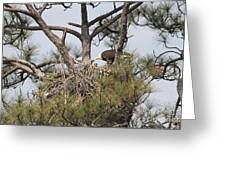 Eagle And Babies Greeting Card