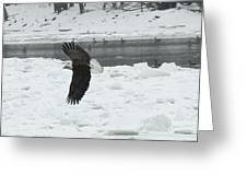 Eagle By River Greeting Card