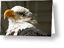 Eagle Eye Greeting Card