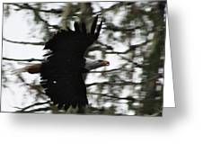 Eagle Fly By Greeting Card