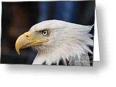 Eagle Head Greeting Card