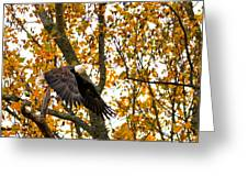 Eagle In Autumn Greeting Card