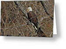 Eagle In Tree 3 Greeting Card
