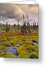 Eagle Plains, Yukon Territory, Canada Greeting Card
