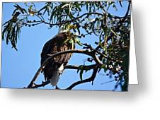 Eagle Under Cover Greeting Card