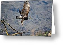 Eagle's Wings Greeting Card