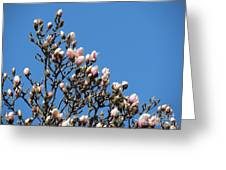Early Flowering Magnolia Greeting Card