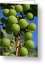 Early Grapes Greeting Card