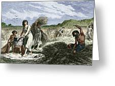 Early Humans Harvesting Crops Greeting Card
