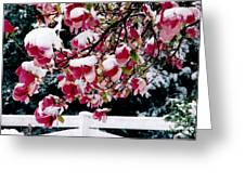 Early Magnolia Late Snow Greeting Card