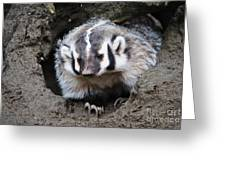Early Morning Badger Greeting Card