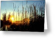 Early Morning In Maine Greeting Card