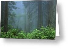 Early Morning In The Forest, Humboldt Greeting Card