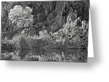 Early Morning Light Black And White Greeting Card