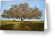 Early Morning Oak Greeting Card
