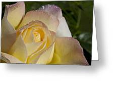 Early Morning Peace Rose Greeting Card