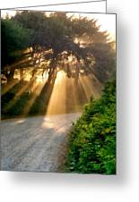 Early Morning Sunlight Greeting Card