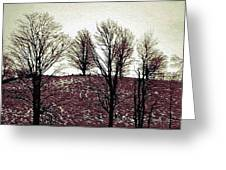 Early Morning Trees Greeting Card by Miss Dawn