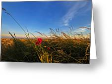 Early Poppies Greeting Card