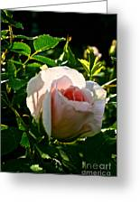 Early Rose Greeting Card
