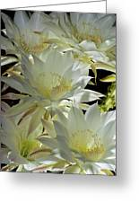Easter Lily Cactus Bouquet Greeting Card