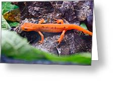 Easterm Newt Nnotophthalmus Viridescens 10 Greeting Card