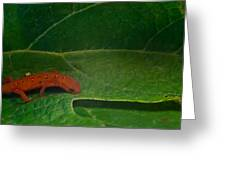 Easterm Newt Nnotophthalmus Viridescens 17 Greeting Card