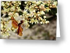Eastern Amberwing On Wild Buckwheat Greeting Card