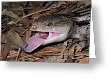 Eastern Blue-tongue Skink Threat Display Greeting Card