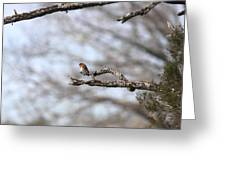 Eastern Bluebird - Old And Alive Greeting Card