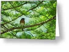 Eastern Bluebird In Bald Cypress Tree Greeting Card
