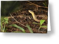 Eastern Garter Snake - Checkered Coloration Greeting Card