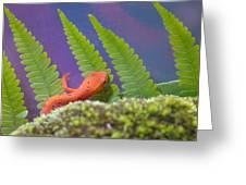 Eastern Newt 1 Greeting Card