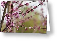 Eastern Redbud Asian Style Greeting Card