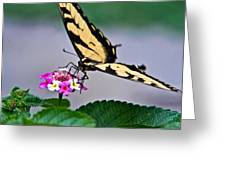 Eastern Tiger Swallowtail 5 Greeting Card