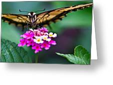 Eastern Tiger Swallowtail 7 Greeting Card