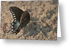 Eastern Tiger Swallowtail 8526 3205 Greeting Card