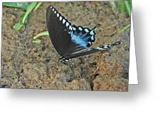 Eastern Tiger Swallowtail 8537 3215 Greeting Card