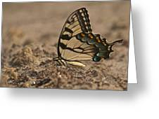 Eastern Tiger Swallowtail 8542 3219 Greeting Card