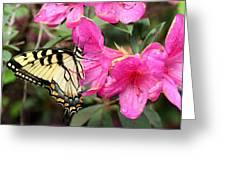 Eastern Tiger Swallowtail On Azalea Greeting Card