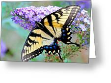 Eastern Tiger Swallowtail On Butterfly Bush Greeting Card