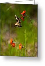 Eastern Tiger Swallowtail Profile Shot Greeting Card