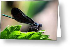 Ebony Jewelwing In The Spotlight Greeting Card