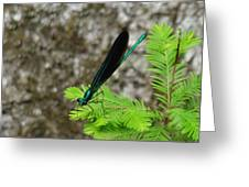 Ebony Jewelwing Male Greeting Card