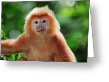 Ebony Leaf Monkey Trachypithecus Greeting Card
