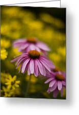 Echinacea Dreamy Greeting Card