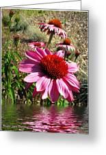 Echinacea In Water Greeting Card